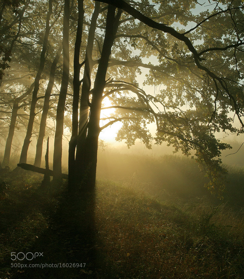 Photograph Morning in the Forest by Vadim Trunov on 500px