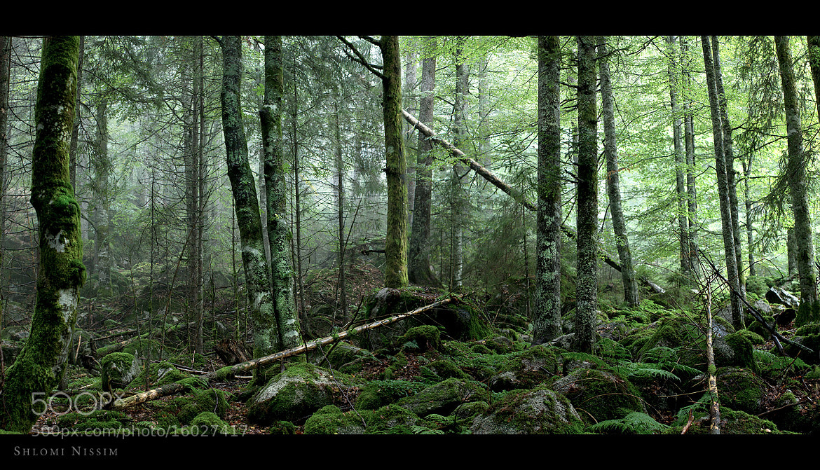 Photograph forest by shlomi nissim on 500px