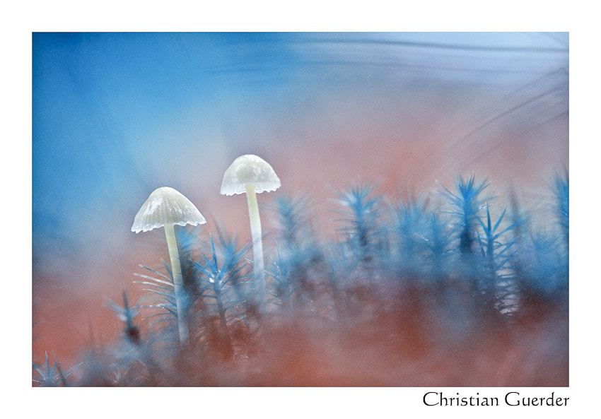 Photograph Mushrooms by CHRISTIAN GUERDER on 500px