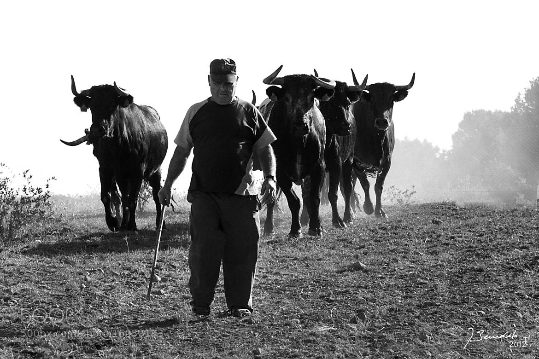 Photograph De pastoreo by Javi Benedito on 500px