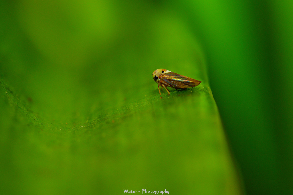 Photograph Tamron SP 90mm F2.8 Macro by Shui  Yuan on 500px