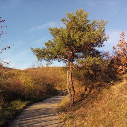 Der Baum am Wege
