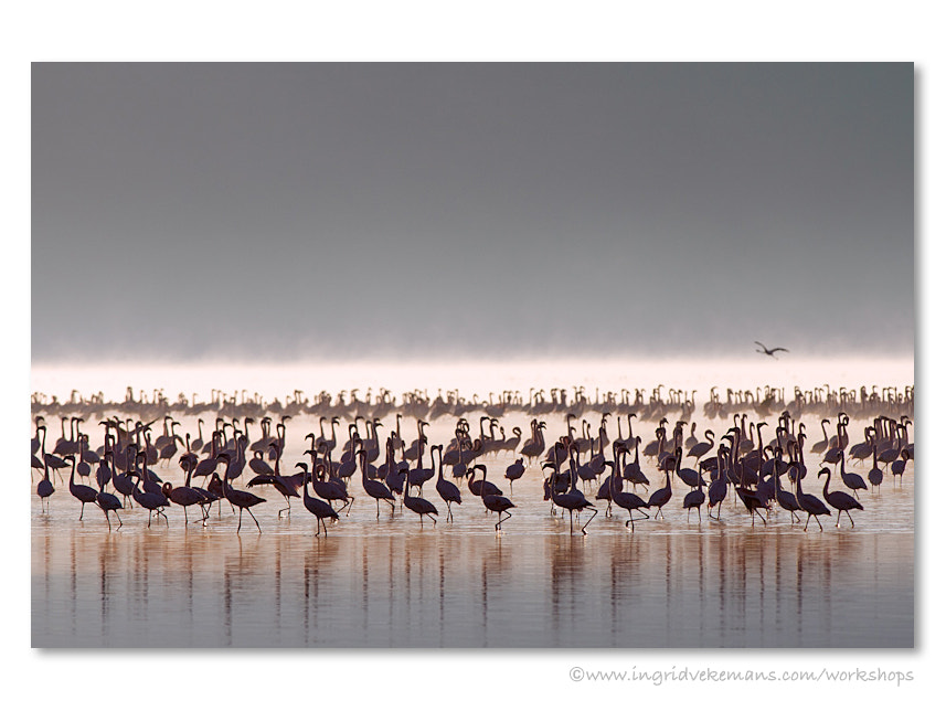 Photograph Nakuru Awakening by Ingrid Vekemans on 500px
