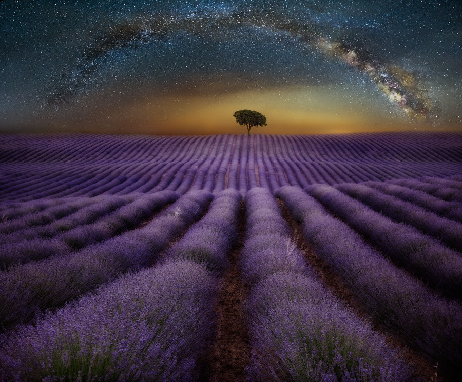Perfume of the stars by Pedro