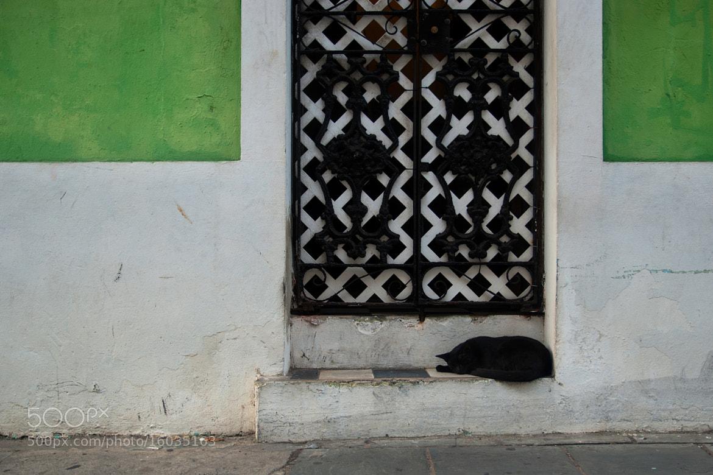 Photograph Black Cat (San Juan, Puerto Rico) by James Clear on 500px