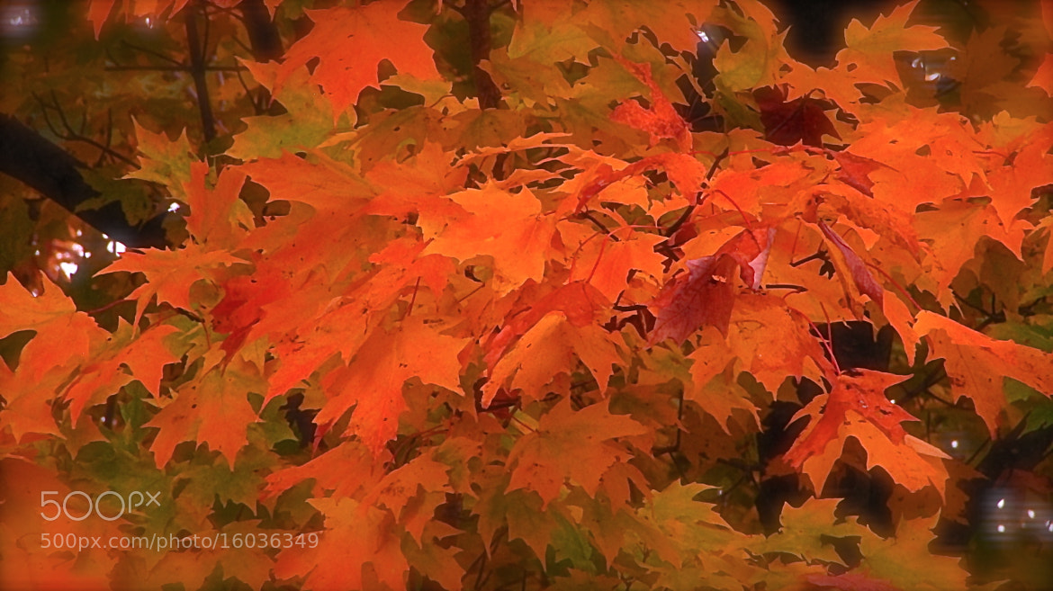 Photograph Fall Color by Amit Prabhu on 500px