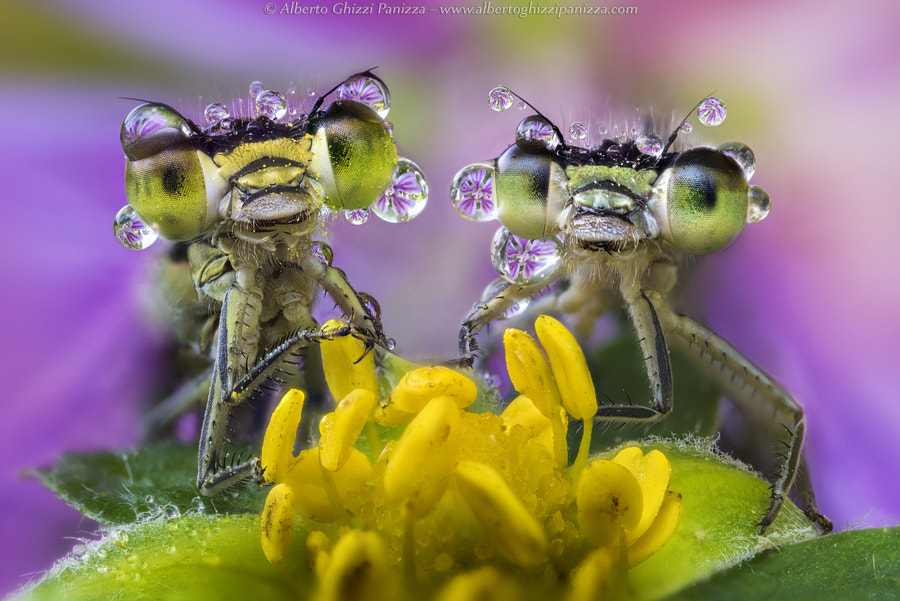 A shower of colors by Alberto Ghizzi Panizza