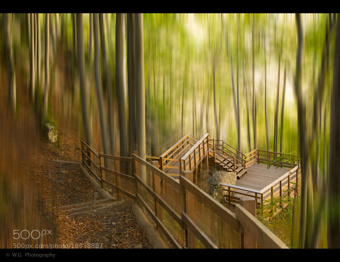 Photograph Disturbing  forest by Guillaume Weber on 500px