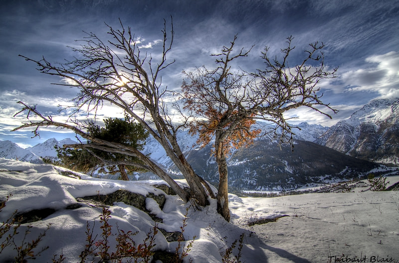 Photograph tree of winter by Thibaut Blais on 500px