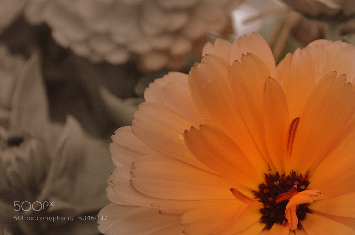 Photograph Orange and wet by Marie Sivertsen on 500px