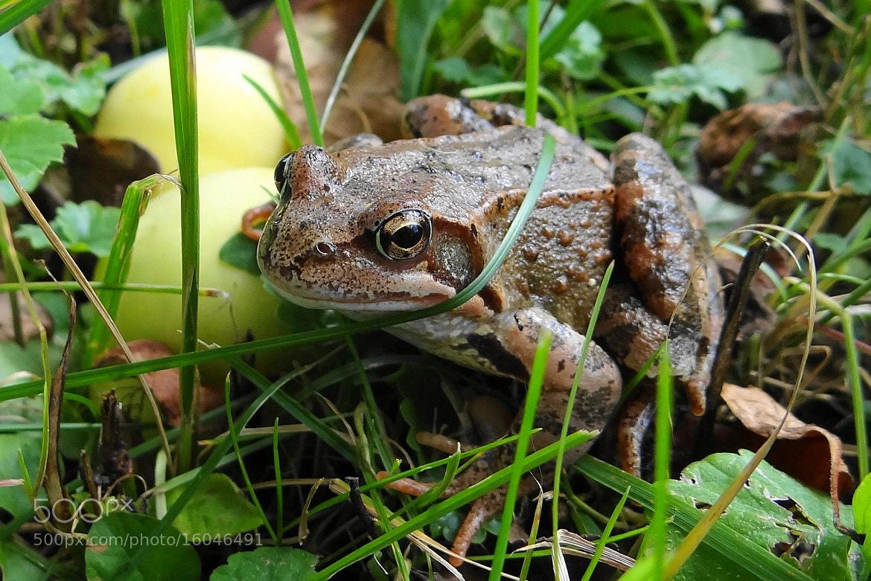 Photograph Frog by Игорь Орлов on 500px
