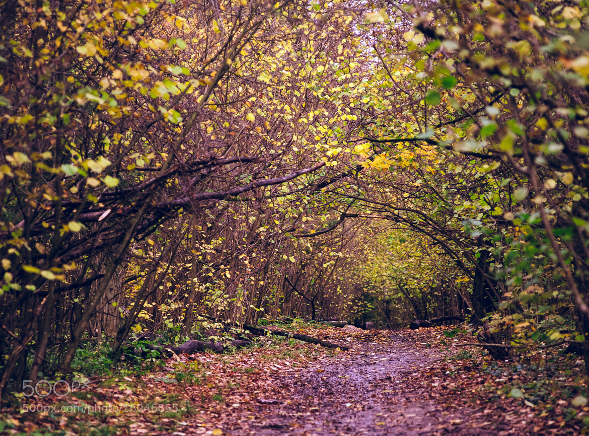 Photograph pathway in the forest by ivon daniel on 500px