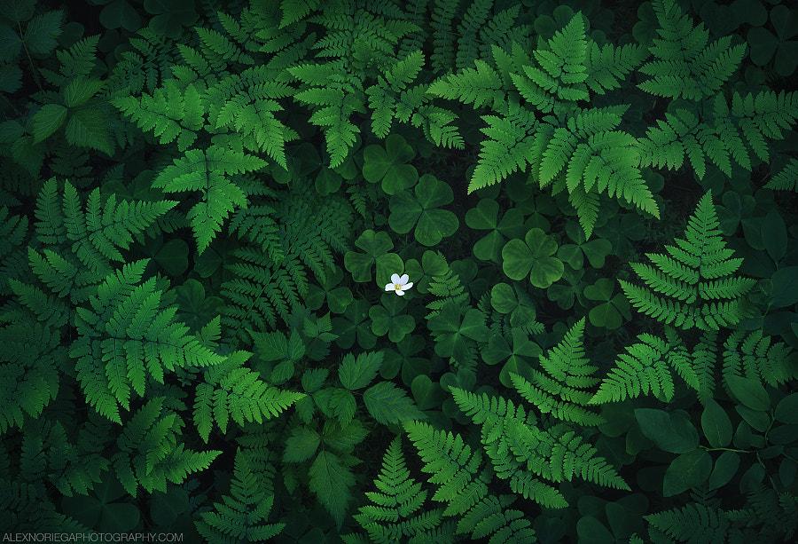 Sanctuary by Alex Noriega on 500px.com