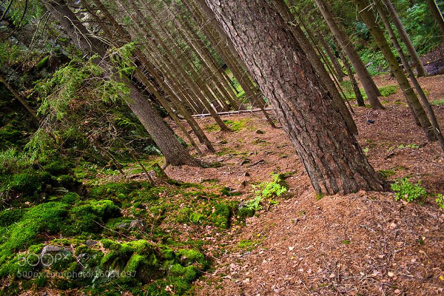 Photograph drunk trees by Soňa Kovalčíková on 500px