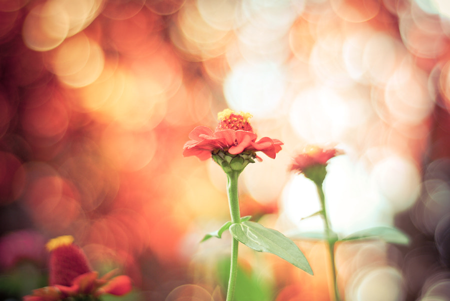 Photograph Bokeh wonderland by Justyna Frąckowiak on 500px