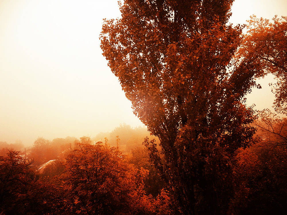 Photograph In the morning by Mia Jitaru on 500px