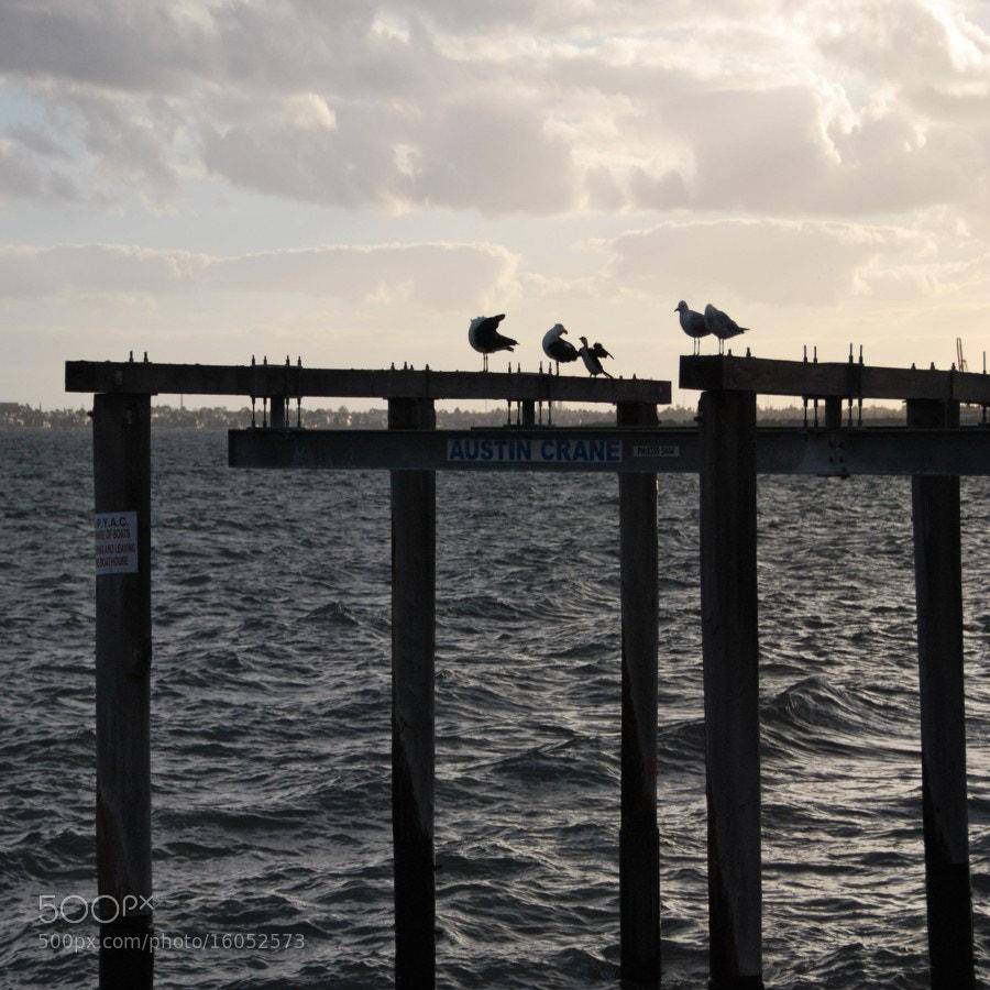 Photograph Birds at Sunset by Elizabeth Atkinson on 500px