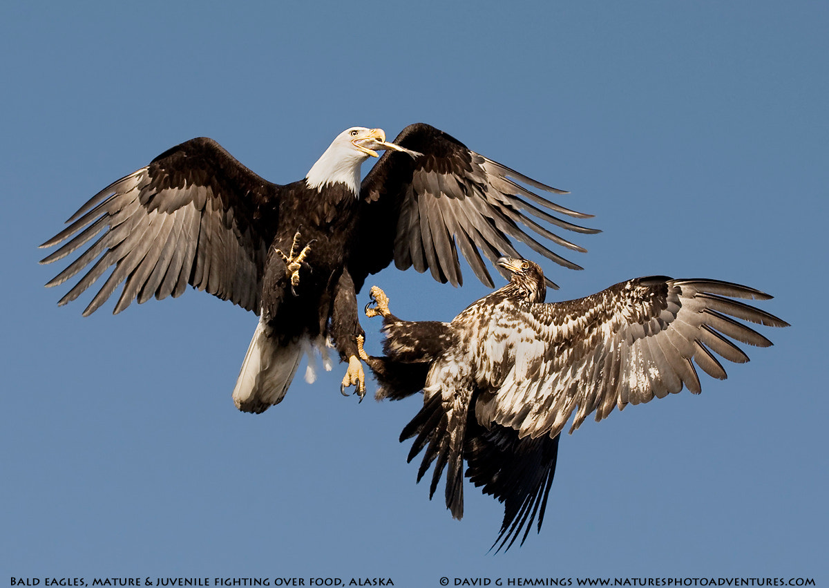 Photograph Mid Air Battle by David Hemmings on 500px