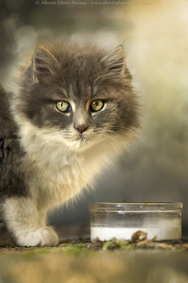 All I need is just some more milk by Alberto Ghizzi Panizza on 500px.com