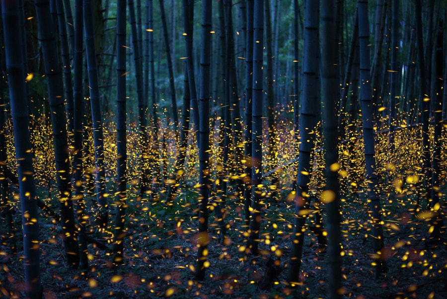Enchanted Bamboo Forest by Nomiyama Kei on 500px.com