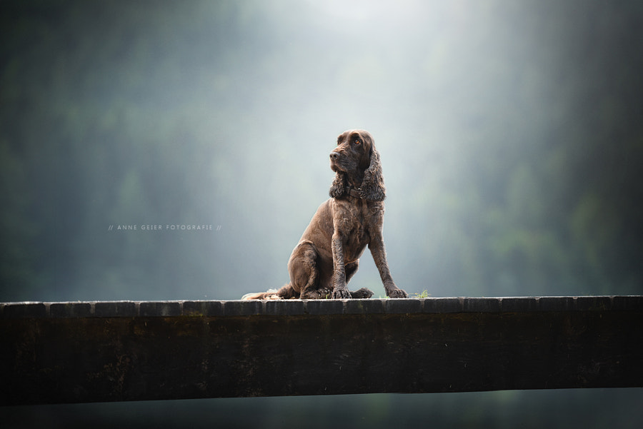 Gismo by Anne Geier on 500px.com