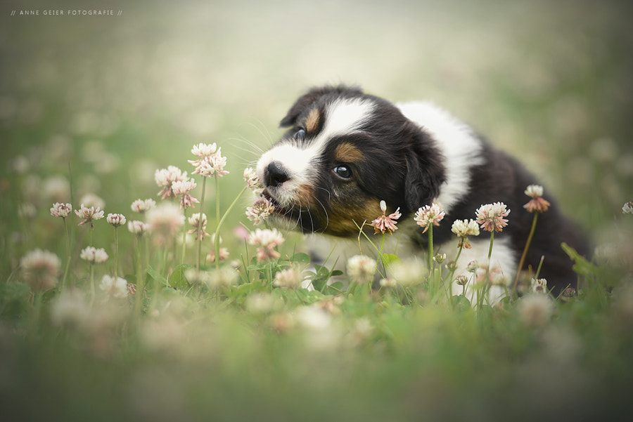 - cutie - by Anne Geier on 500px.com