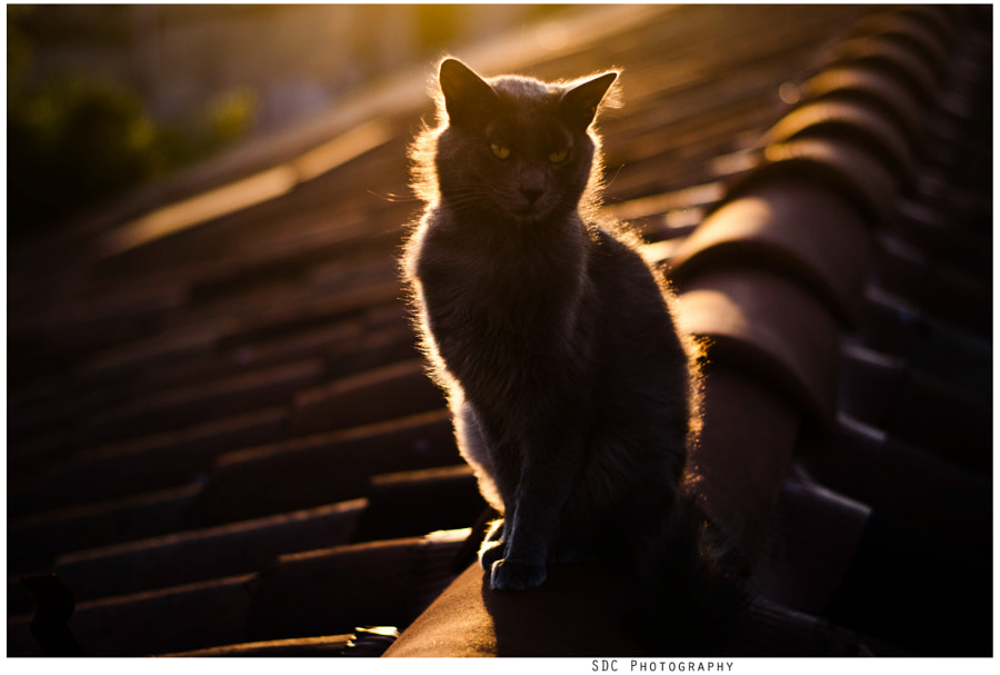 Mon amour de chat. by maxence SDC on 500px.com