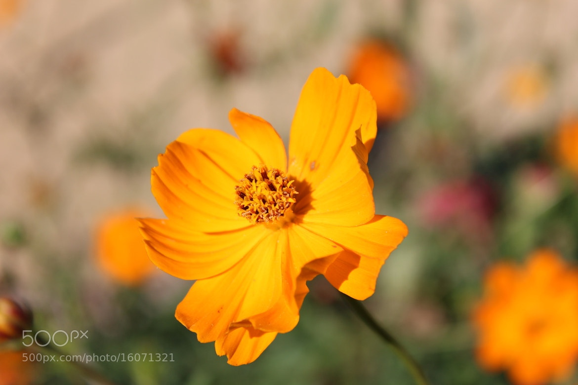 Photograph cheerful by Kelly Elizabeth on 500px