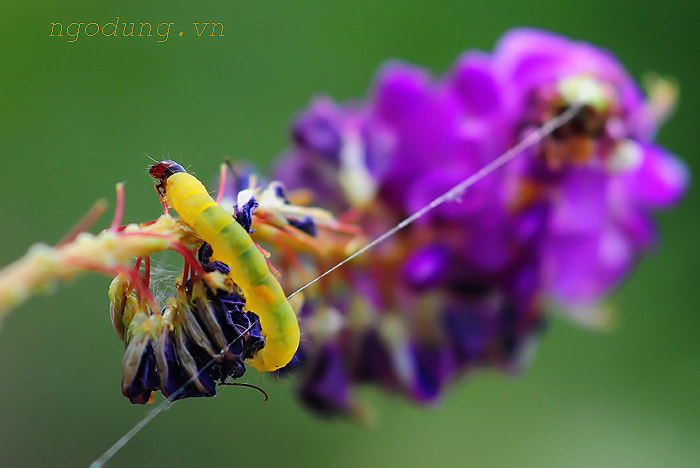 Photograph Ngo Dung macro 02 by Ngo Dung photographer  on 500px