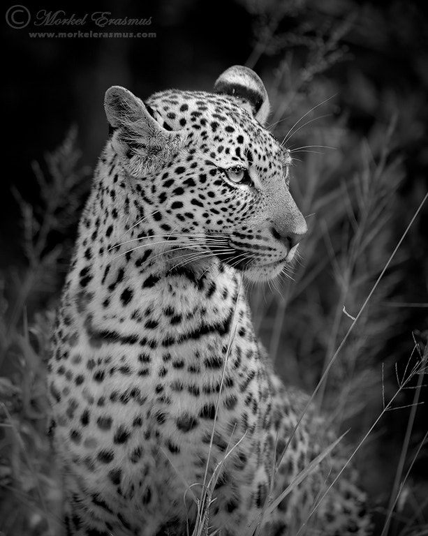 Photograph Regally Poised by Morkel Erasmus on 500px