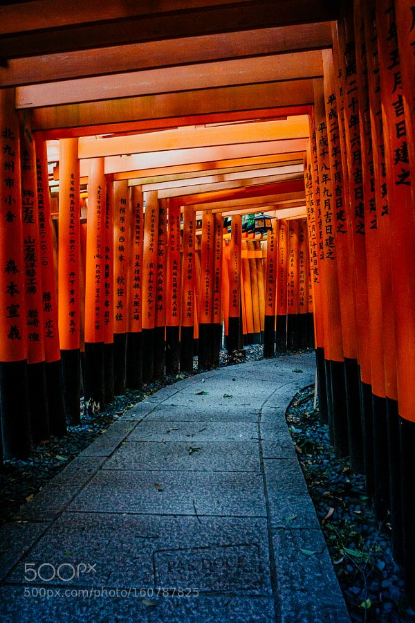 Light and shadows at Fushimi Inari - Kyoto