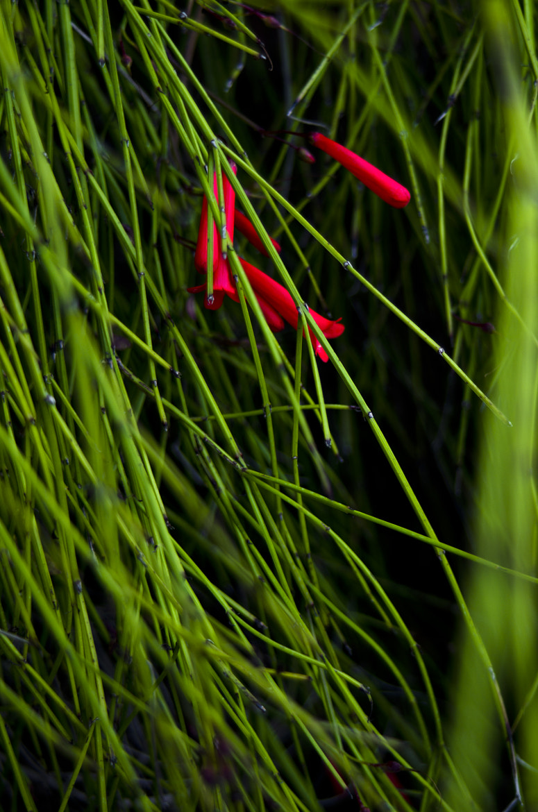 Photograph Hidden Red by Dario Trbic on 500px