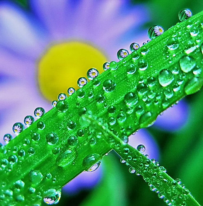 Photograph morning dew by tugba kiper on 500px