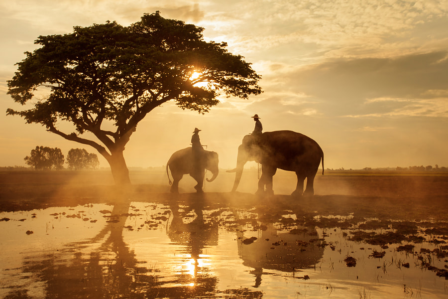 Elephants walking under big tree in silhouette#4 by Patchiya Wasitworapol on 500px.com