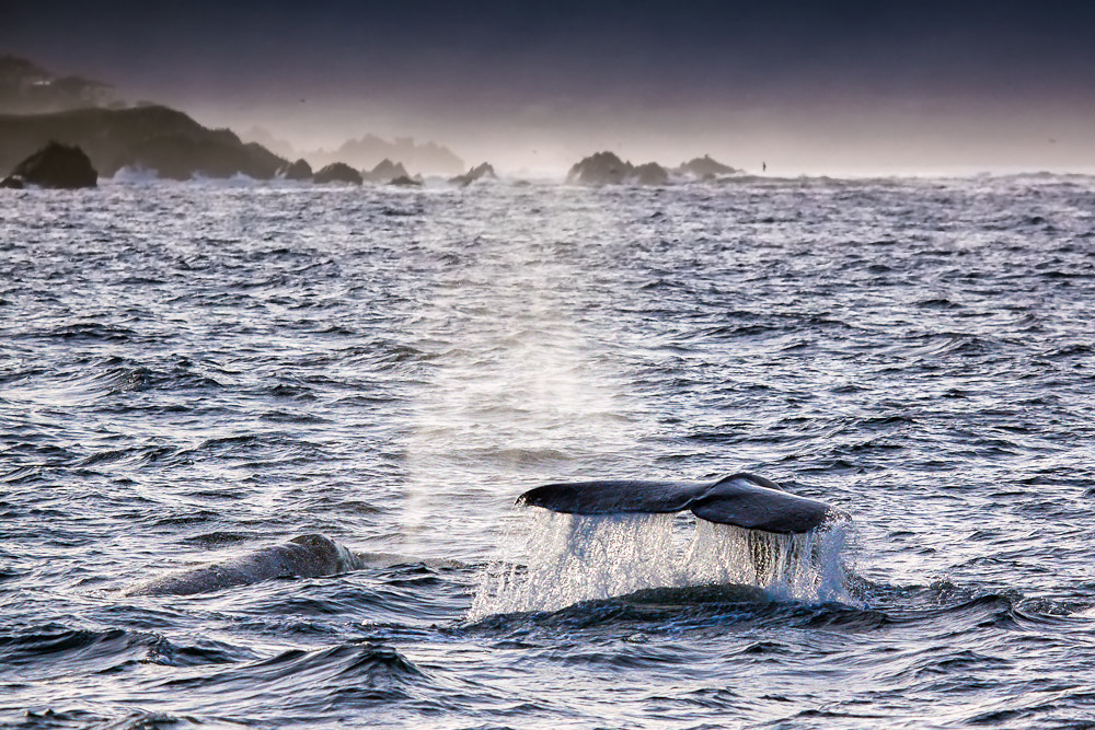 Photograph ...whale watching... by Stefan Geyer on 500px