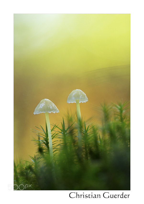Photograph Little elves by CHRISTIAN GUERDER on 500px