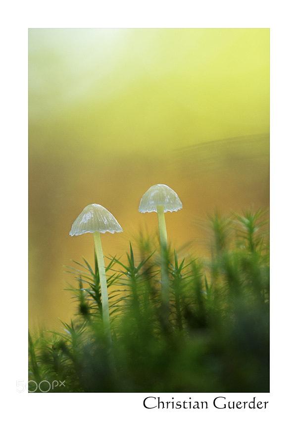 Photograph Little elves by CHRISTIAN GUERDER on 500px