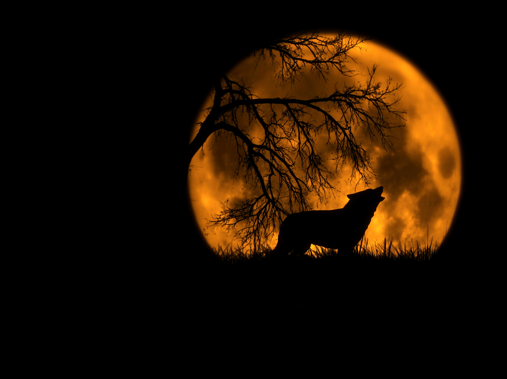 Photograph The wolf and moon by Schipor Catalin on 500px