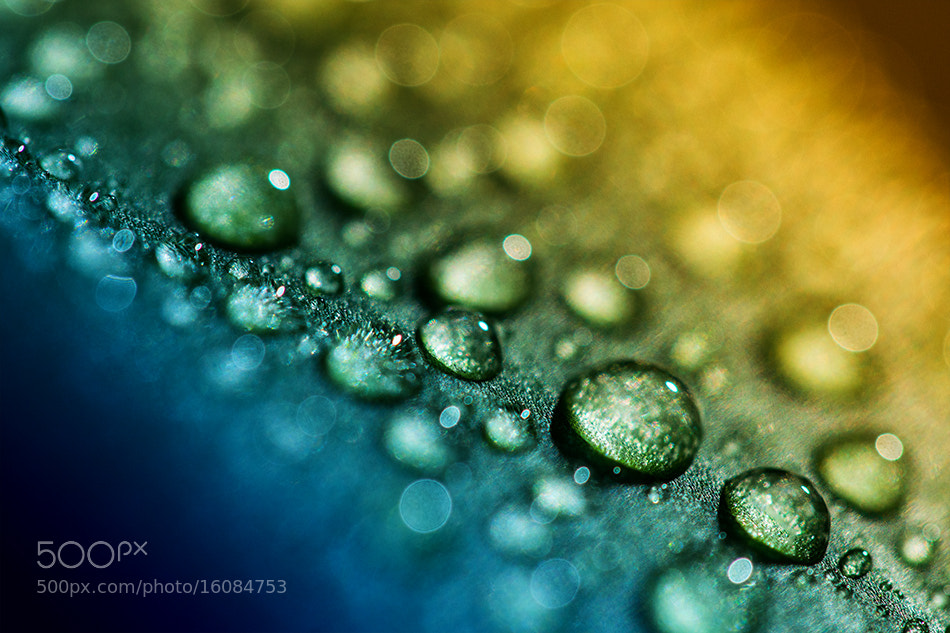 Photograph DROPS by Adriana K.H. on 500px