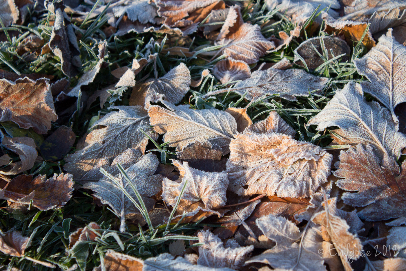 Photograph First frost of the year by Billy Floberg on 500px