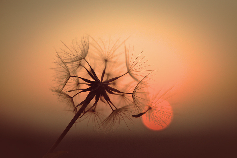 Photograph SUN IN SOUL by Adriana K.H. on 500px