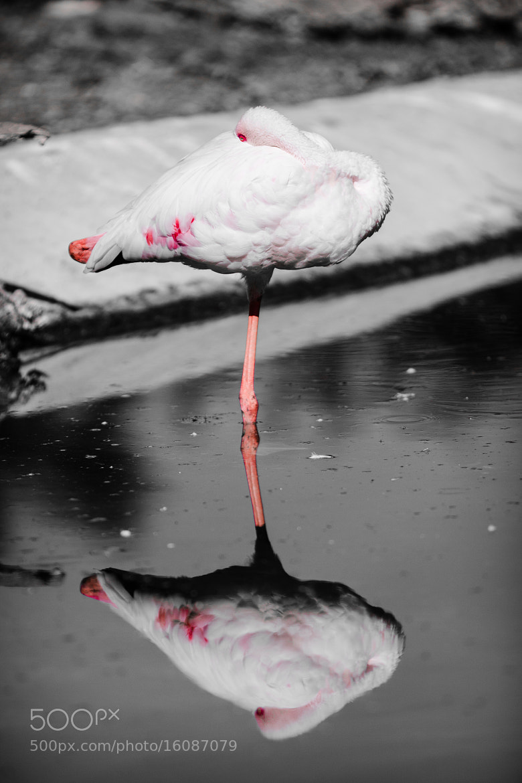 Photograph in a mirror, darkly by Sérgio Bernardino on 500px