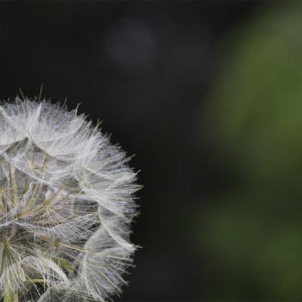 Seed ball