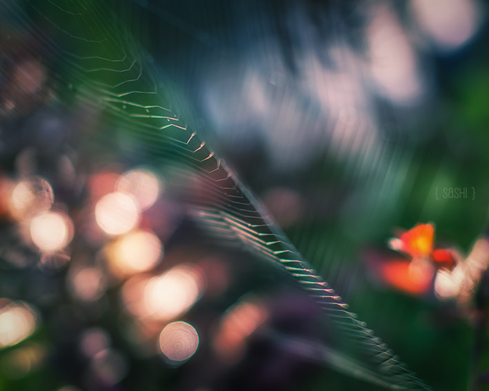 Photograph Fragile Things by Alex Arnaoudov on 500px