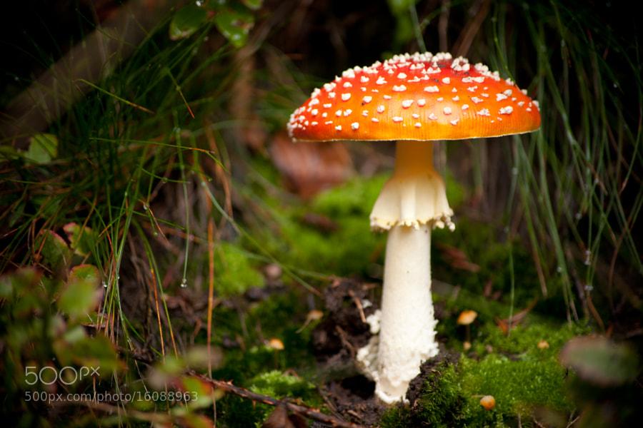 Ein Männlein steht im Walde... by Jennifer Renner (jenniferrenner) on 500px.com