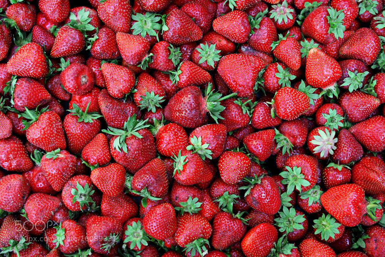 Photograph Strawberry Season by Kinga Sorbán on 500px