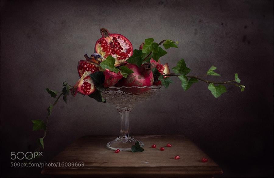 Photograph Рlodoa bouquet of pomegranate! by Viktoria Imanova on 500px