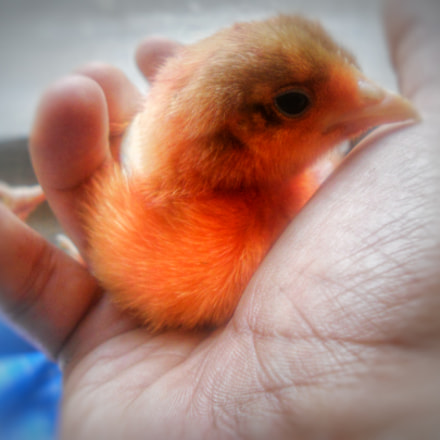 Cute Chick , Nikon COOLPIX L24