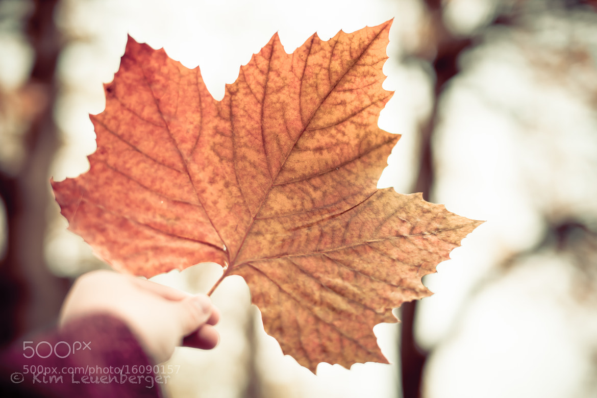 Photograph Hello you beautiful autumn by Kim Leuenberger on 500px