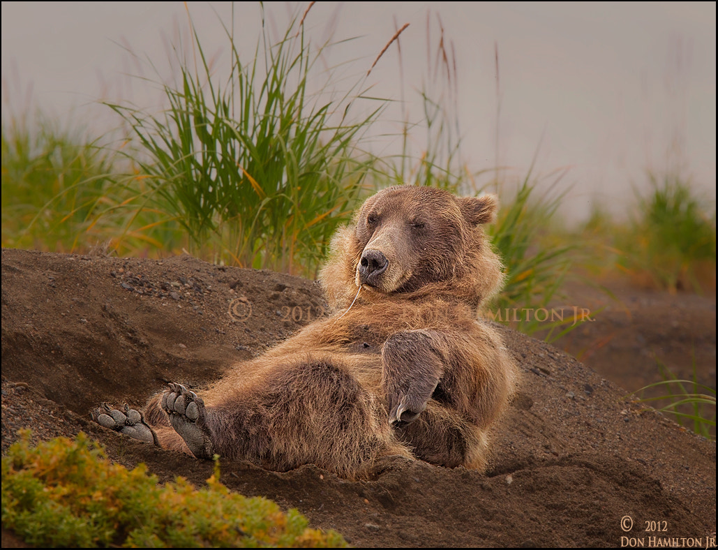 Photograph Nap  Time! by Don  Hamilton Jr. on 500px